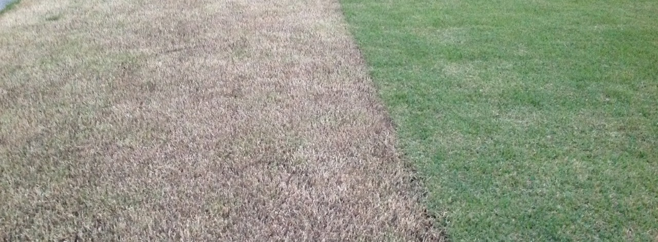 ITS TIME TO SCALP YOUR LAWN ! ....WHAT IS SCALPING?